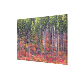 Autumn colors of forests in The Cascade 3 Canvas Print