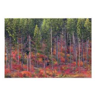 Autumn colors of forests in The Cascade 5 Poster
