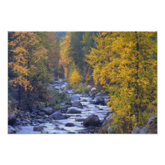 Autumn colors of forests in The Cascade 6 Poster