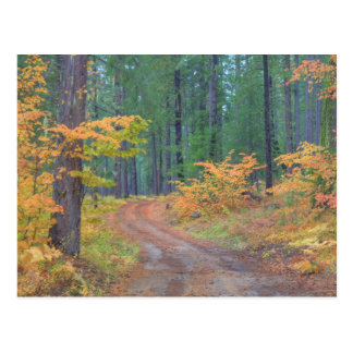 Autumn colors of forests in The Cascade 7 Postcard