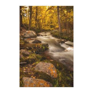 Autumn colors on Crestone Creek Canvas Print