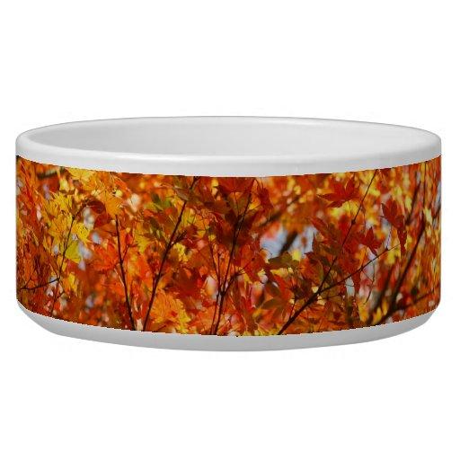 Autumn colors pet food bowl