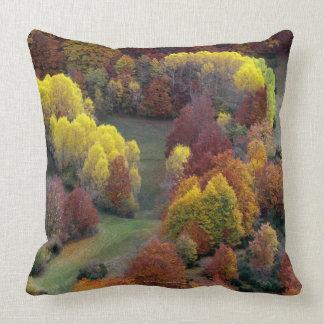 Autumn Colors Pillows