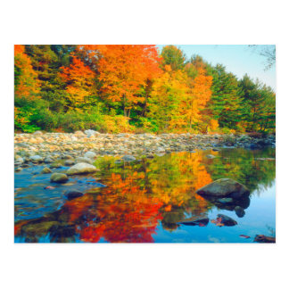 Autumn Colors reflecting in a stream in Vermont Postcard