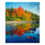 Autumn Colors reflecting in a stream in Vermont Poster