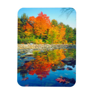 Autumn Colors reflecting in a stream in Vermont Rectangular Photo Magnet