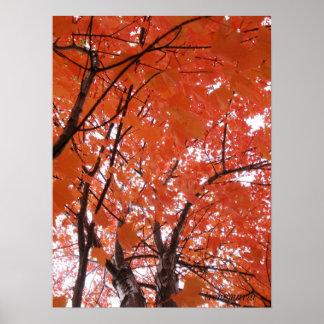 Autumn colours posters