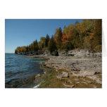 trees, leaves, autumn, fall, nature, scenery,