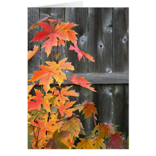 Autumn contrasts card