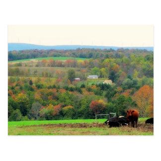 Autumn Cows Postcard