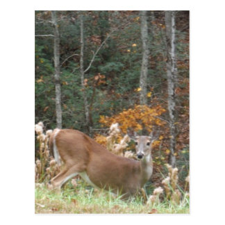Autumn Deer in Lake Arrowhead GA Postcard