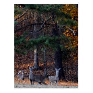 Autumn Deer in the distance Postcard