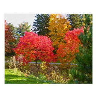 """""""AUTUMN DELIGHT""""/FALL COLOR AT TOLEDO BOTANICAL POSTER"""
