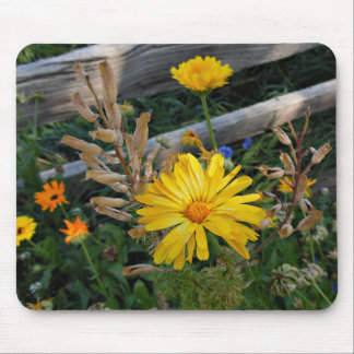 Autumn Delight Mouse Pad