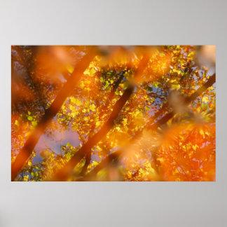 Autumn Delight Print