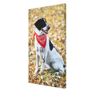 Autumn Dog Stretched Canvas Prints