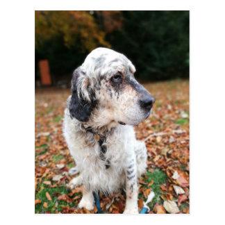Autumn Dog Postcard