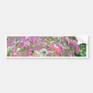 Autumn Dogwood Bumper Sticker
