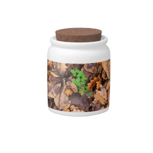 Autumn Dry Leaves and Green Clovers Candy Dish