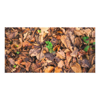 Autumn Dry Leaves and Green Clovers Picture Card