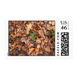 Autumn Dry Leaves and Green Clovers Stamps