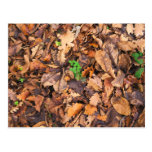 Autumn Dry Leaves and Green Clovers Postcard