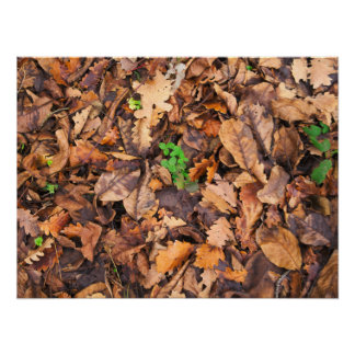 Autumn Dry Leaves and Green Clovers Posters