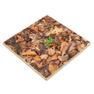Autumn Dry Leaves and Green Clovers Wood Coaster