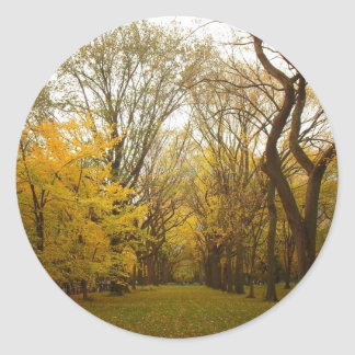 Autumn Elm Trees in Central Park, New York City Classic Round Sticker