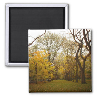 Autumn Elm Trees in Central Park, New York City Magnet