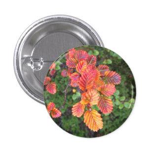 Autumn fagus badge buttons
