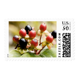 Autumn Fall Berries Postage