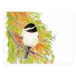 Autumn, Fall, Chickadee, Bird Nature Postcard