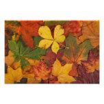 Autumn Fall Leaves Photo Print