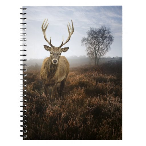 Autumn Fall with beautiful red deer stag Spiral Notebook
