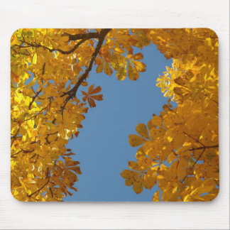 Autumn Falling Leaves Chestnut Tree Mouse Pad