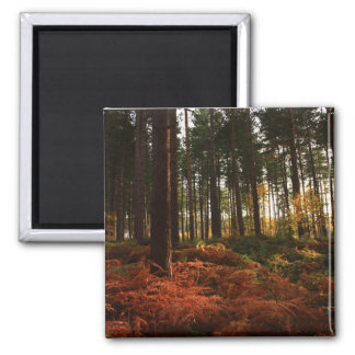 Autumn Ferns 2 Inch Square Magnet