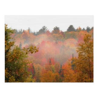 Autumn Field Adirondacks Trees Scene Landscape Postcard