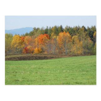 Autumn Field Adirondacks Trees Scene Landscape Postcards