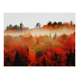 Autumn Field Adirondacks Trees Scene Landscape Poster