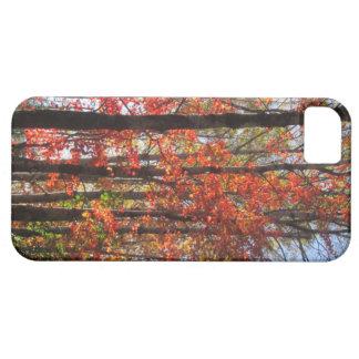 autumn fire iPhone 5 case
