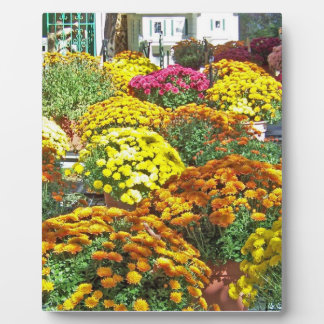 Autumn Flowers in Pots Plaque