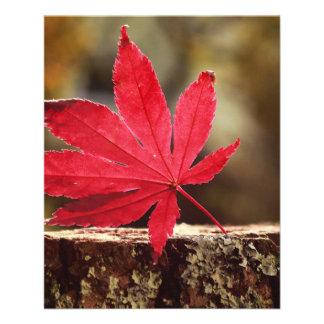 Autumn Full Color Flyer