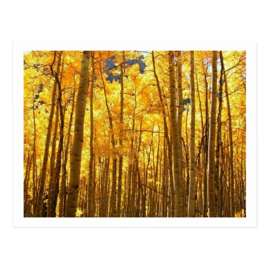 Autumn Foilage Postcard