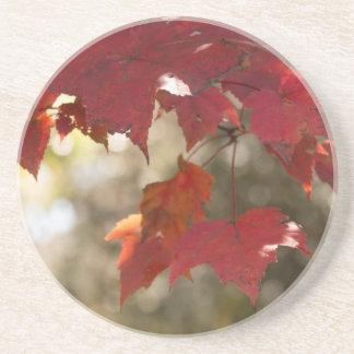 Autumn Foliage Drink Coaster