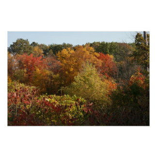 Autumn Foliage in Michigan Poster