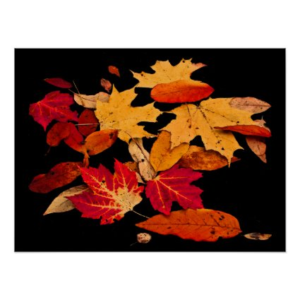 Autumn Foliage in Red Orange Yellow Brown Poster