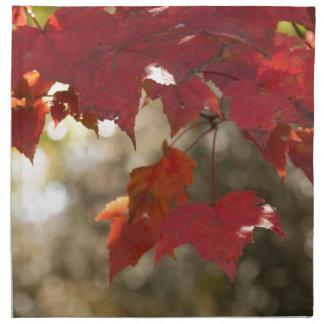 Autumn Foliage Napkin