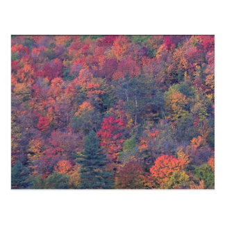 Autumn foliage of a mixed hardwood forest postcard