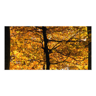 Autumn foliage customized photo card